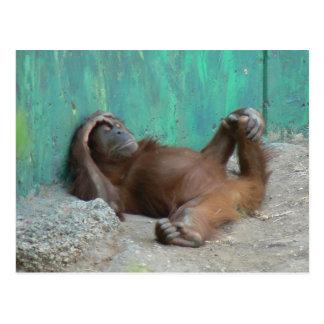 Baby orangutang resting postcard