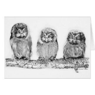 Baby_Owls Card