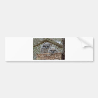 Baby Owls in a Wicker Basket Nest Bumper Sticker