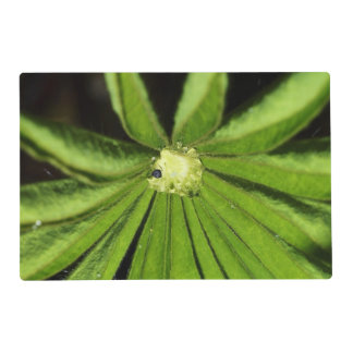 Baby Palm Plant Laminated Placemat