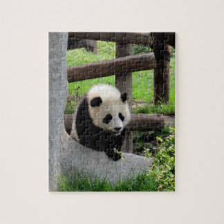 Baby Panda Jigsaw Puzzle