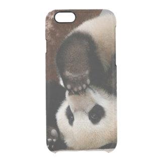 Baby pandas playing - baby panda  cute panda clear iPhone 6/6S case