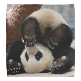 Baby pandas playing - baby panda  cute panda do-rag