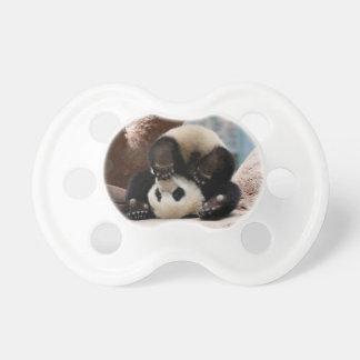 Baby pandas playing - baby panda  cute panda pacifier