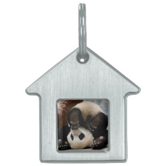 Baby pandas playing - baby panda  cute panda pet ID tag