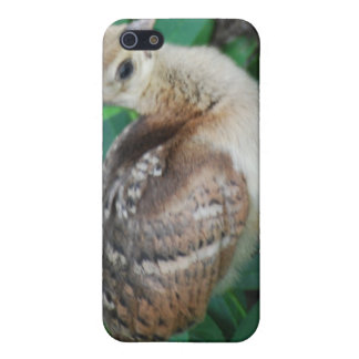 Baby Peacock Chick iPhone 4 Case