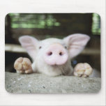 Baby Pig in Pen, Piglet Mouse Pads