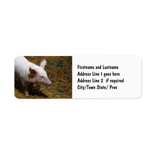 Baby Piglet Photograph for Pig Farmers