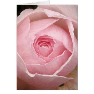 baby pink rose card