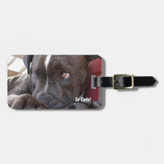 Baby Pitbull Puppy Luggage Tag