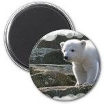 Baby Polar Bear Magnet Fridge Magnets