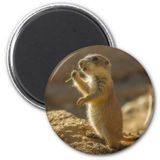 Baby prairie dog eating, Arizona 2 Inch Round Magnet
