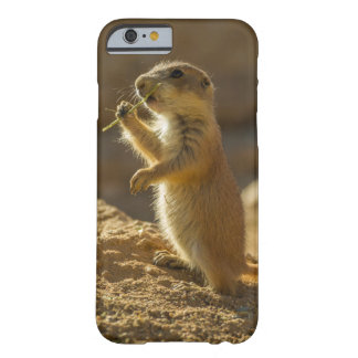 Baby prairie dog eating, Arizona Barely There iPhone 6 Case