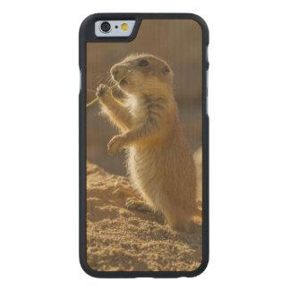 Baby prairie dog eating, Arizona Carved® Maple iPhone 6 Slim Case