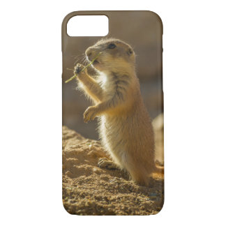 Baby prairie dog eating, Arizona iPhone 7 Case