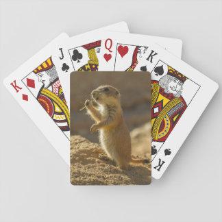 Baby prairie dog eating, Arizona Playing Cards