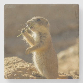 Baby prairie dog eating, Arizona Stone Coaster