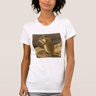 Baby prairie dog eating, Arizona T-Shirt