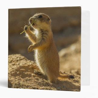 Baby prairie dog eating, Arizona Vinyl Binders