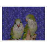 Baby Quaker Parrot Pair Photo Painting Poster