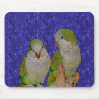 Baby Quaker Parrots Animal Mousepad