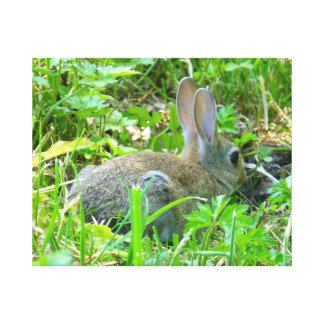 Baby Rabbit Canvas Print