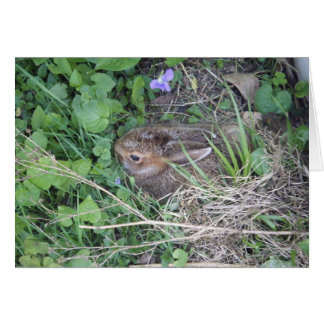 Baby Rabbit-New Pet Note Card