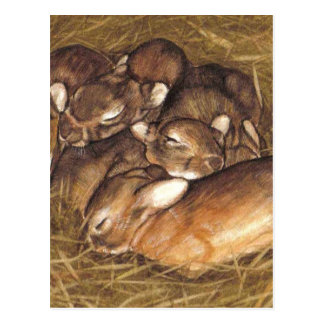 baby rabbits kits in nest art postcard