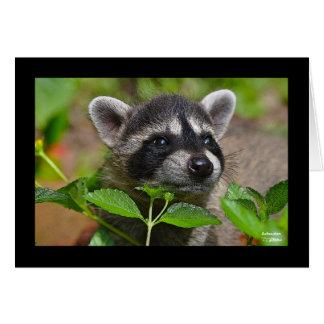 Baby Raccoon Notecard