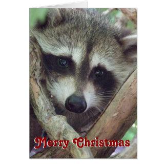 Baby Raccoon Photo, Christmas Card