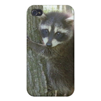 baby raccoon speck  cover cases for iPhone 4
