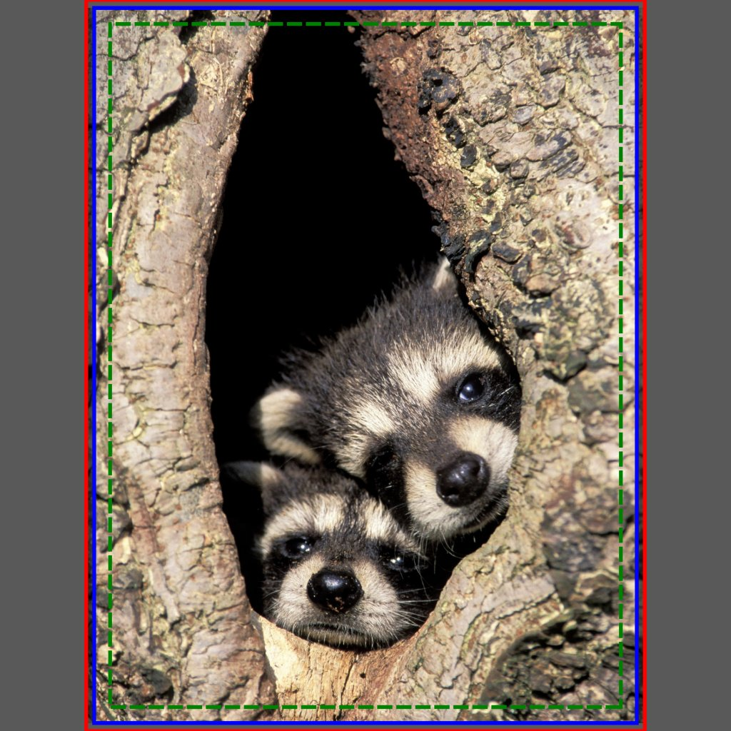 Raccoons Babies For Sale Baby Raccoons in Tree Cavity