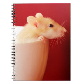 Baby rat in teacup. notebooks