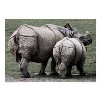 BABY RHINOCEROS and MOTHER in WILD Poster