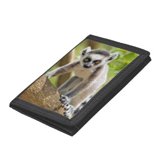 Baby ring-tailed lemur tri-fold wallets