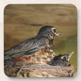 Baby Robin Leaving The Nest Drink Coaster