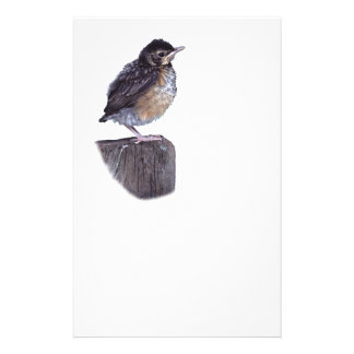 baby robin stationery paper