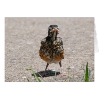 Baby Robin Takes a Stand Card