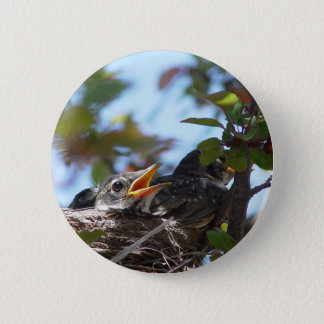 Baby Robins in the Nest Button
