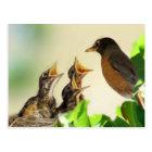 Baby Robins Postcard