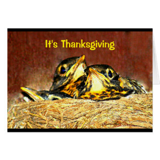 Baby Robins Thanksgiving Humour Card