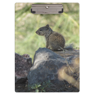 Baby Rock Squirrel Clipboard