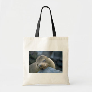 Baby sea lion, Galapagos Islands Tote Bag