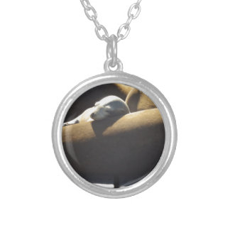 Baby Sea Lion Sleeping Silver Plated Necklace
