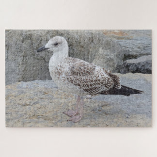 Baby Seagull Jigsaw Puzzle