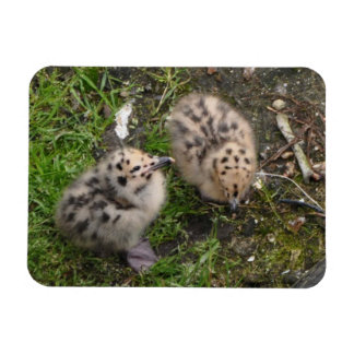 Baby Seagulls! So Cute! Rectangular Photo Magnet
