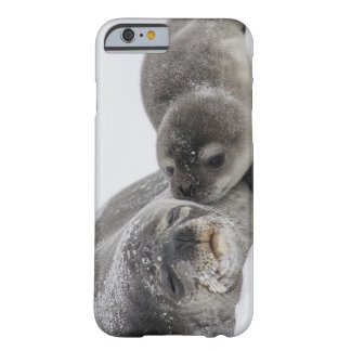 Baby Seal Kissing Mom Barely There iPhone 6 Case