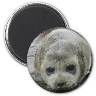 baby seal kotz ak fridge magnet