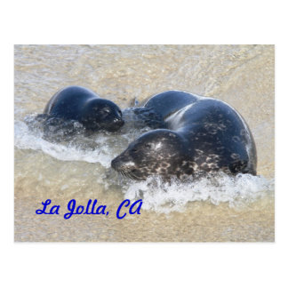 Baby seals in La Jolla Postcard