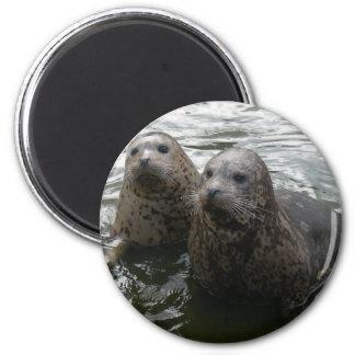 Baby Seals Magnet Fridge Magnets